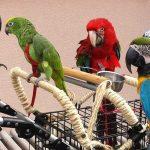 papegaai verzorging