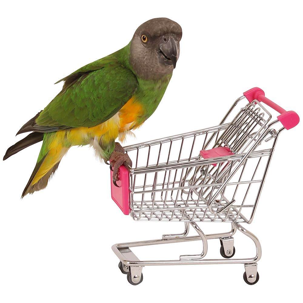 Aanschaf papegaai