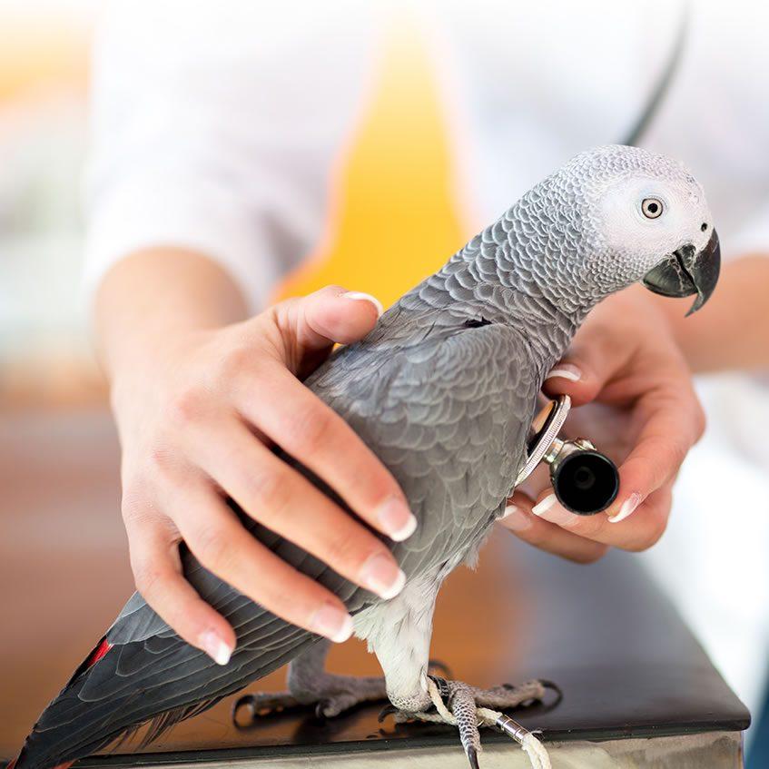 vogelartsen