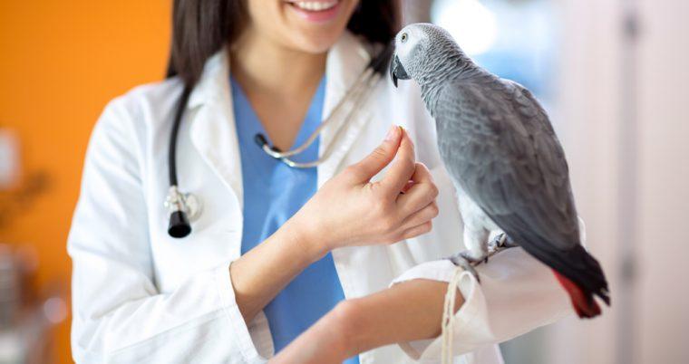 vogelarts