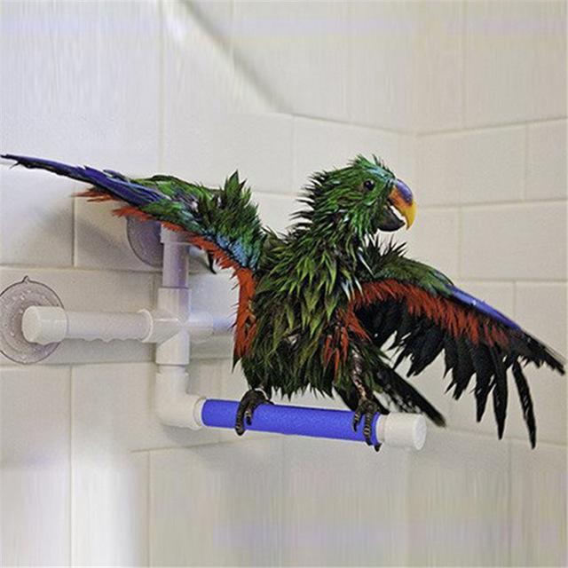Douchen van een papegaai